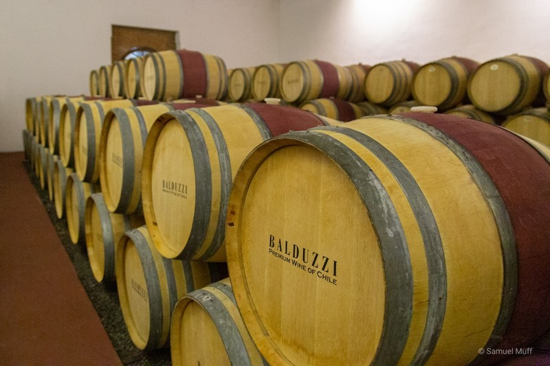 Wine barrels in the Maule valley