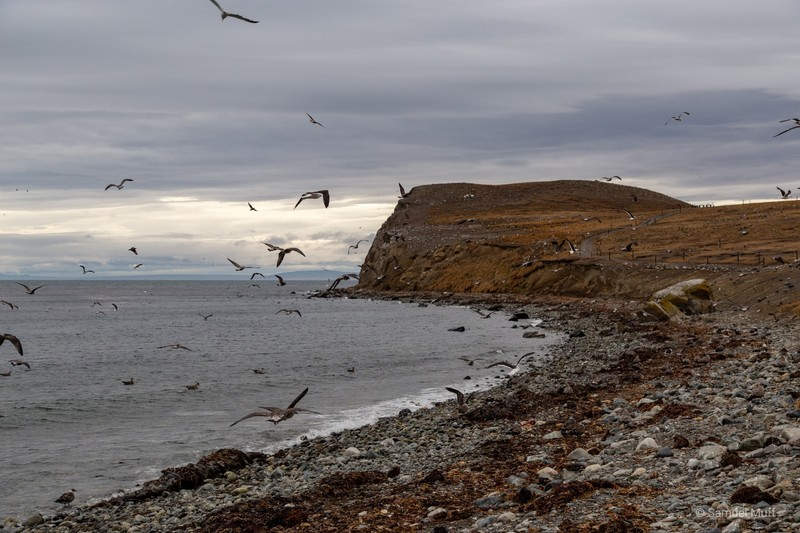 Birds on Isla Magdalena