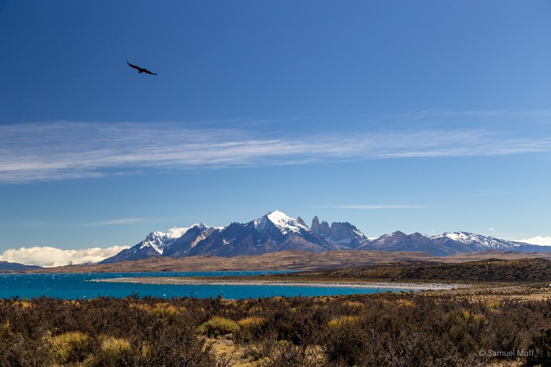 Paine massif and Lago Sarmiento with a condor soaring above