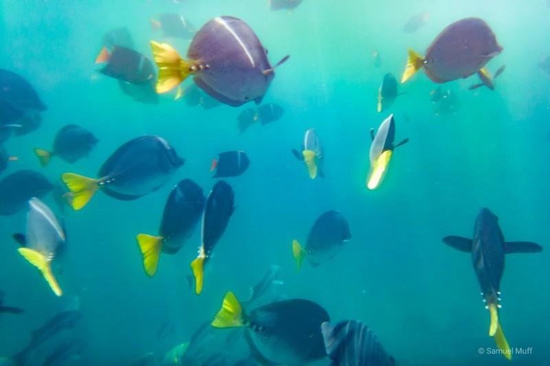 School of fish at Punta Vicente Roca, Isabela Island