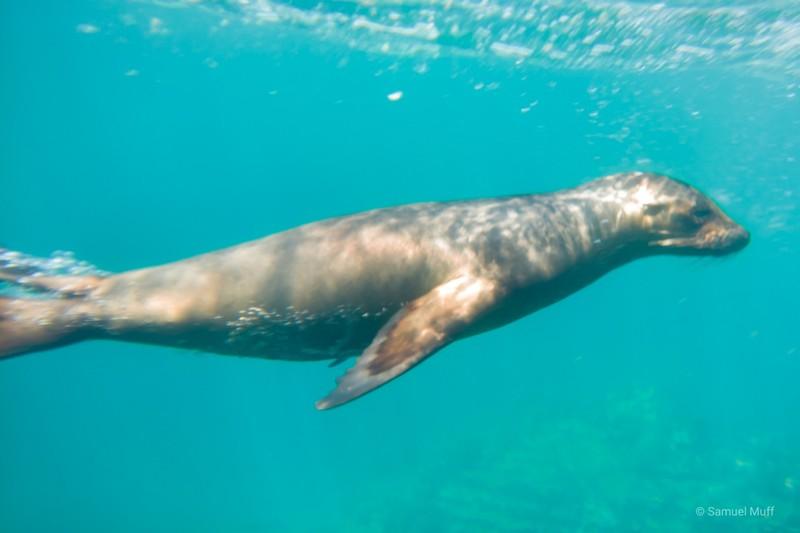 Galapagos sea lion at Punta Vicente Roca, Isabela Island