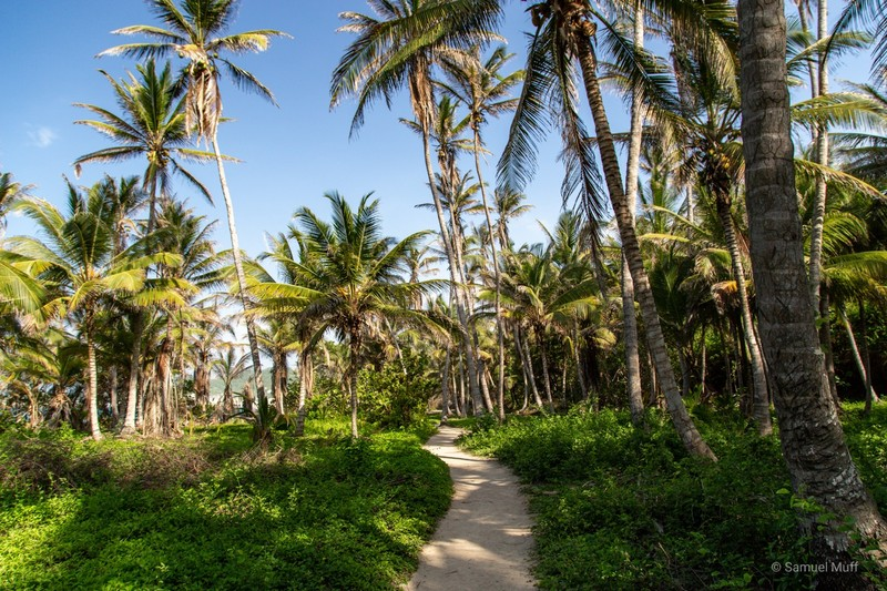Path through palm trees in Tayrona National Park