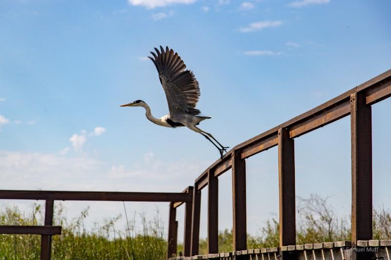 Large bird flying away