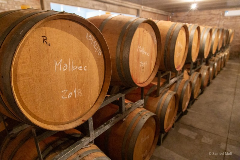 Barrels of Malbec