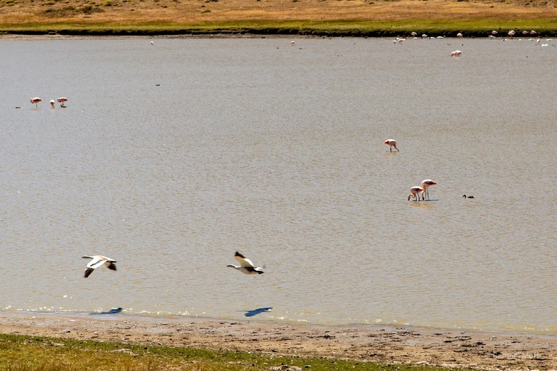 Lagoon with many flamingos