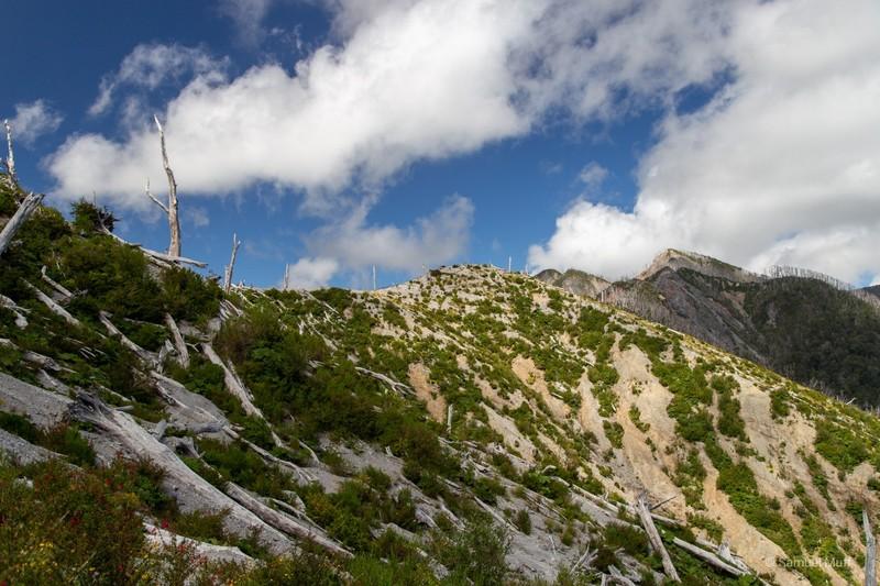 Forest burnt by the heat of Volcán Chaitén