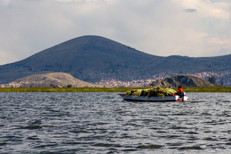 Boat on Lake Titicaca bringing totora reed for island maintenance