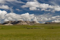 Mongolian landscape with a herd of sheep