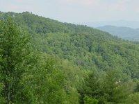 forest__tn1.jpg