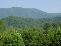 forest_tn2.jpg
