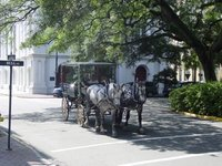 horse_carriage.jpg