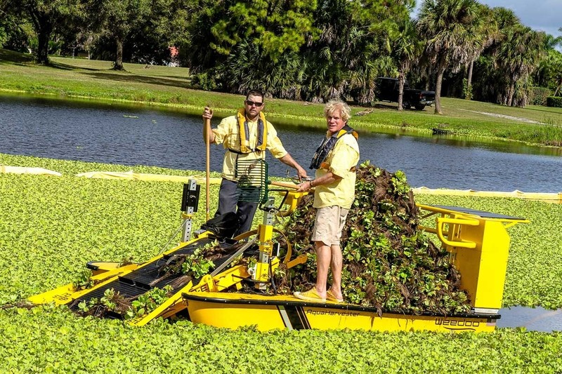 Best Services of Lake Weed Removal