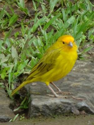 Birds around town ...