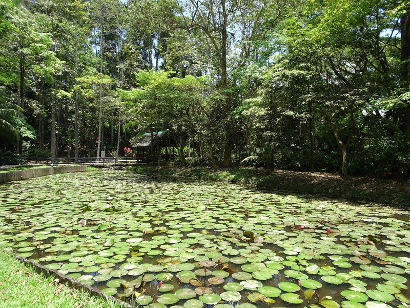 Sandakan Memorial Park - Small lake