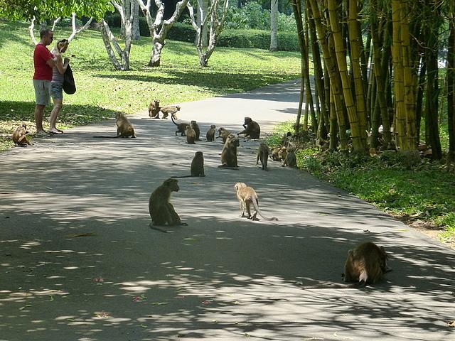 Peradeniya Botanical Gardens - Monkeys