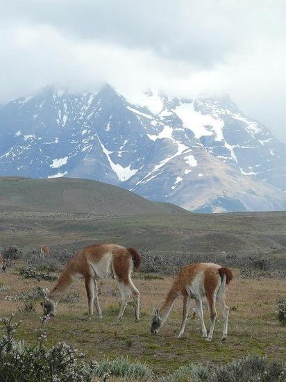 Torres del Paine trip - Guacanos 2