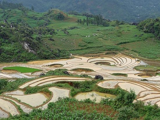 Ta Phin Trek - Rice terraces 5