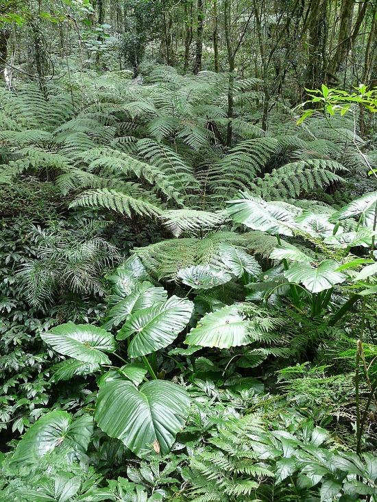 Bunyas Trip - forest walk 2