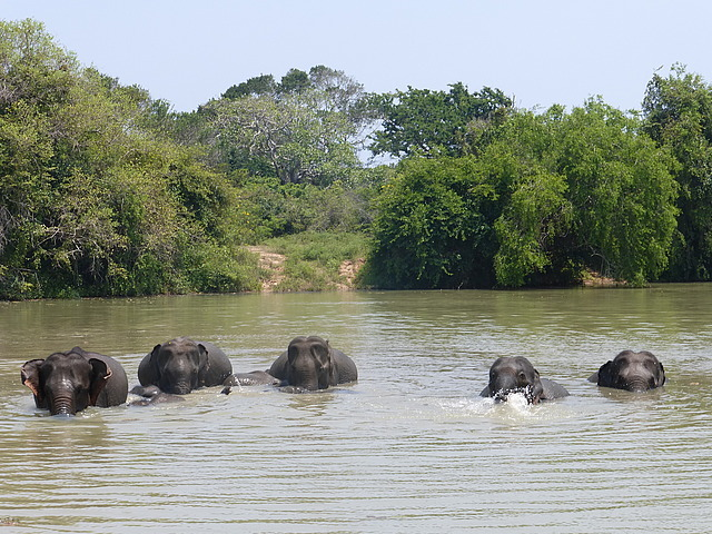 Elephants at waterhole - 6