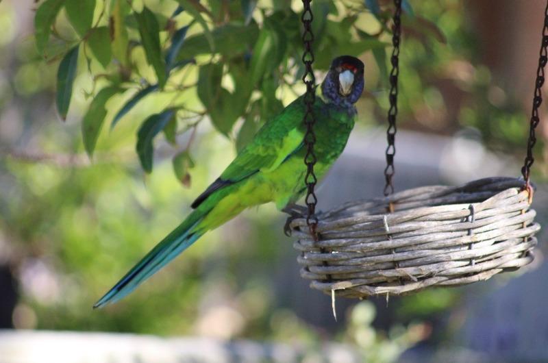"""Birds in the garden - """"28"""" parrot"""