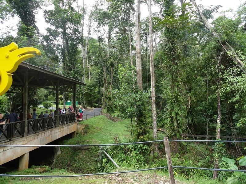 Serenggoh orang-utan feeding area