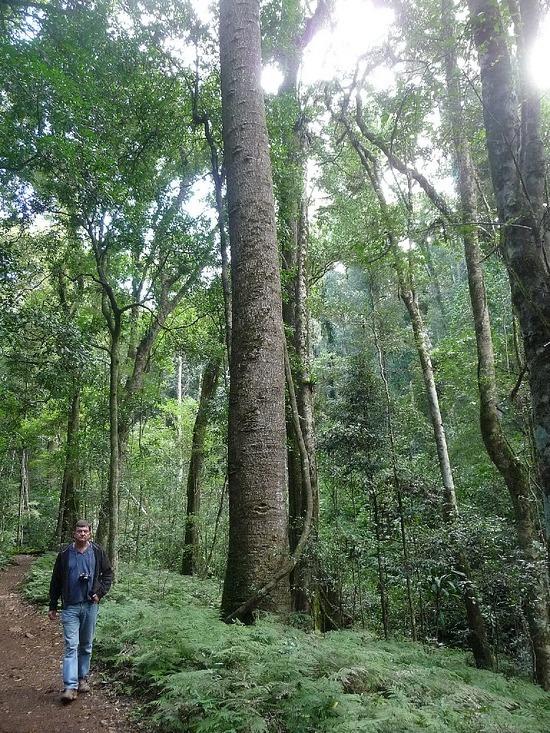 Bunyas Trip - forest walk 3