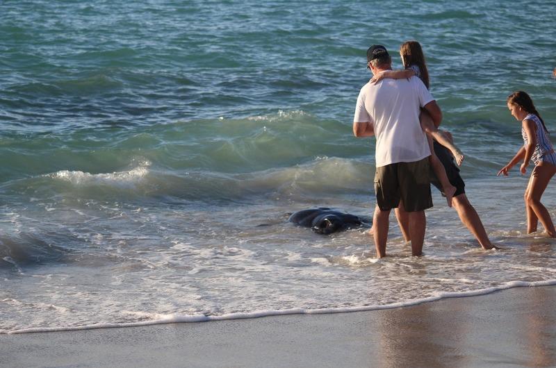 Hamelin Bay - Feeding the Sting Rays