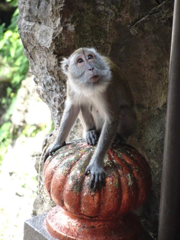 Batu Caves - monkey by steps (one of many!)