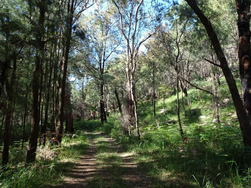 Pittwater YHA - trail in national park