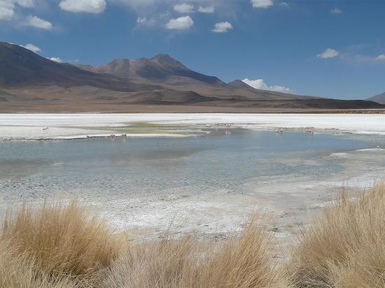 Lagunas   Flamingos 1