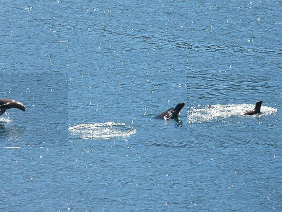 Nav Day 2 - Seal pretending to be a dolphin!