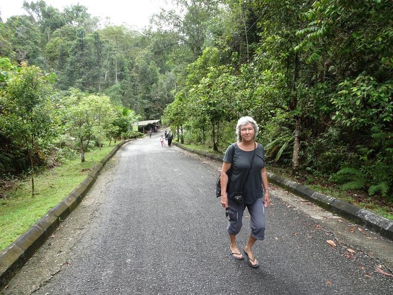 Track to Orang Utans