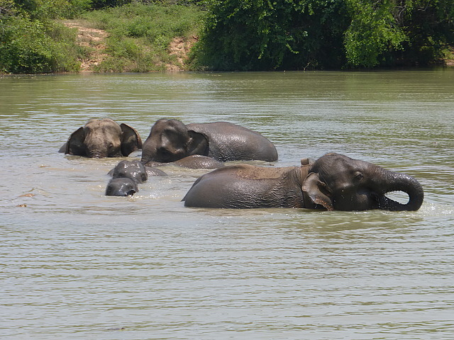 Elephants at waterhole - 4