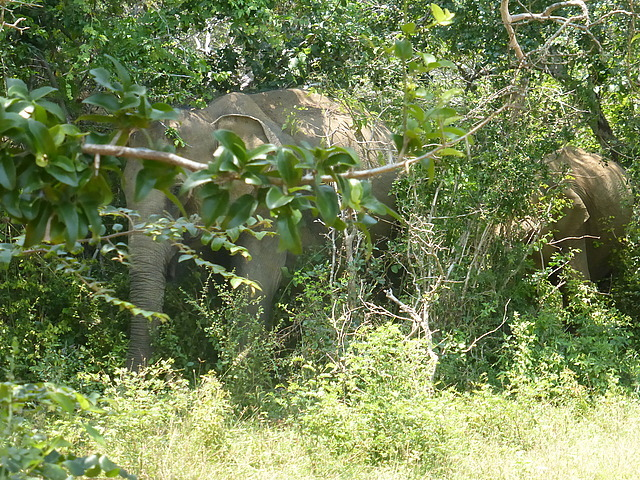 Elephants at waterhole - sighting as we arrived