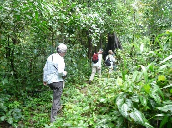 Mamiraua - Walk 1