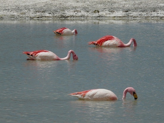 Lagunas   Flamingos 2