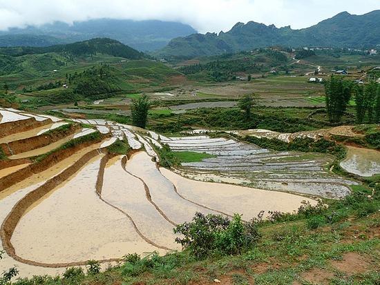 Ta Phin Trek - Rice terraces 6
