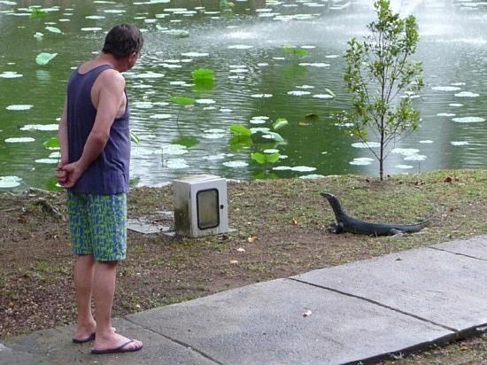 Monitor Lizard checking out Alan