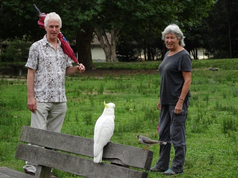 RN Park - Cockatoo, Noisy Minah bird and friends