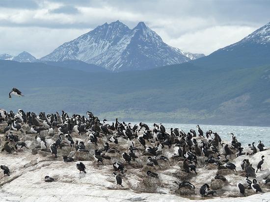 Day 4 - Beagle Channel Trip - Cormorant Colony