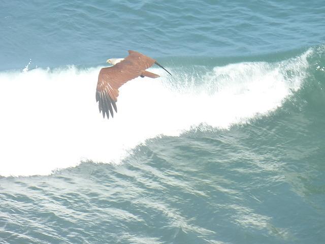 Views froam the Clafouti - Brahminy Kite