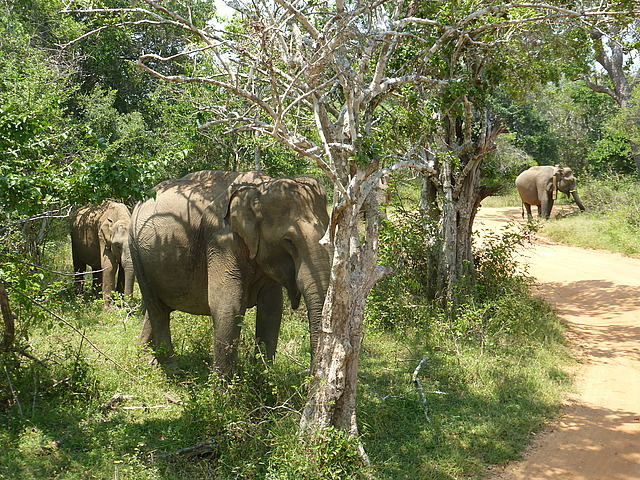 Elephants at waterhole - 2