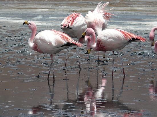Lagunas   Flamingos 3