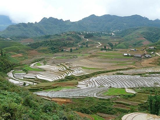 Ta Phin Trek - Rice terraces 2