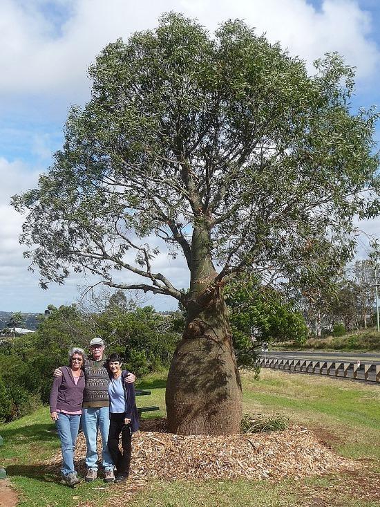 Boabab tree   Lindsey's cousins near Toowoomba