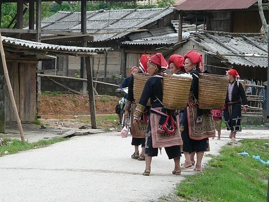 Ta Phin - Red Dao Ladies