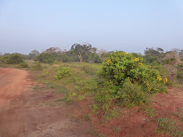 Yala scenery 3