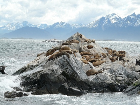 Day 4 - Beagle Channel Trip - Sea Lions