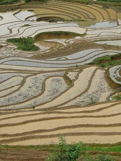 Rice Terraces - Ta Phin Trek