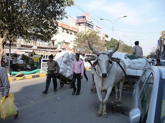Old Delhi - Chandni Chowk 4